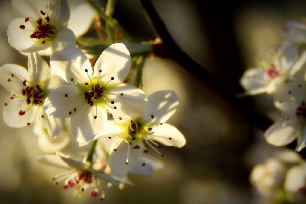 2014.03.10 Tree bloom (17)