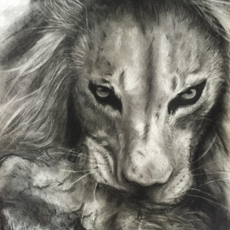 King Lion Charcoal Drawing