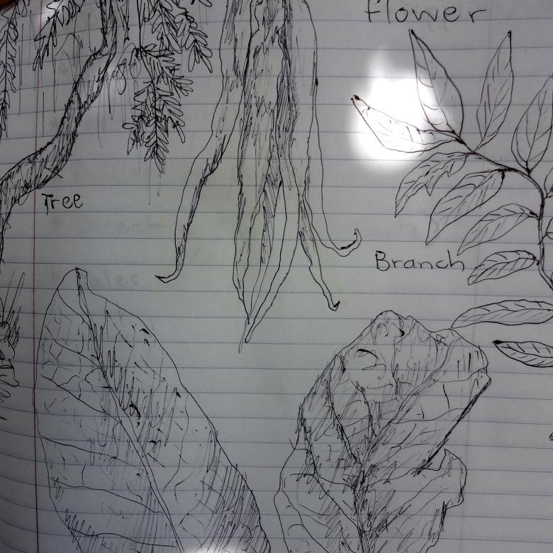 Ylang Ylang Sketch 1
