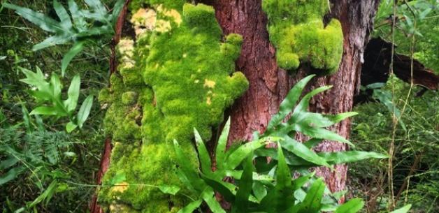 Finding Solace in Nature: Guam Friends, Jungle, Beach, Moonrise, Sunset & More
