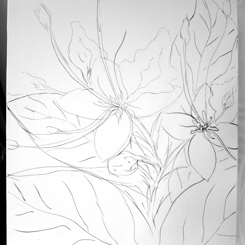 Ifit Flower Sketch 1