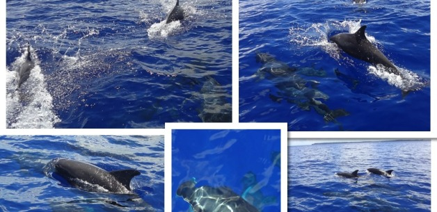 Adventures at Sea~ Surfing, Sailing & Dolphins on Guam